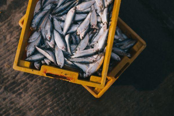 seafood food safety