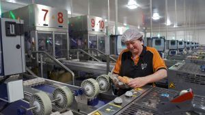 Checking eggs on production line